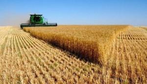 ايران تصدر محاصيل زراعية بقيمة تفوق 3 مليارات دولار